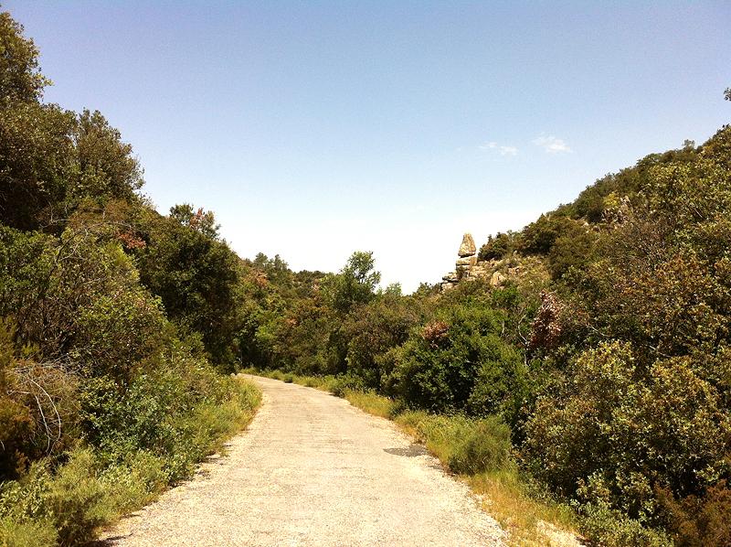 Camino en la Vall de Castellfollit