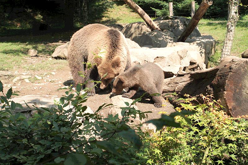 La Osa Canelle con una de sus crías