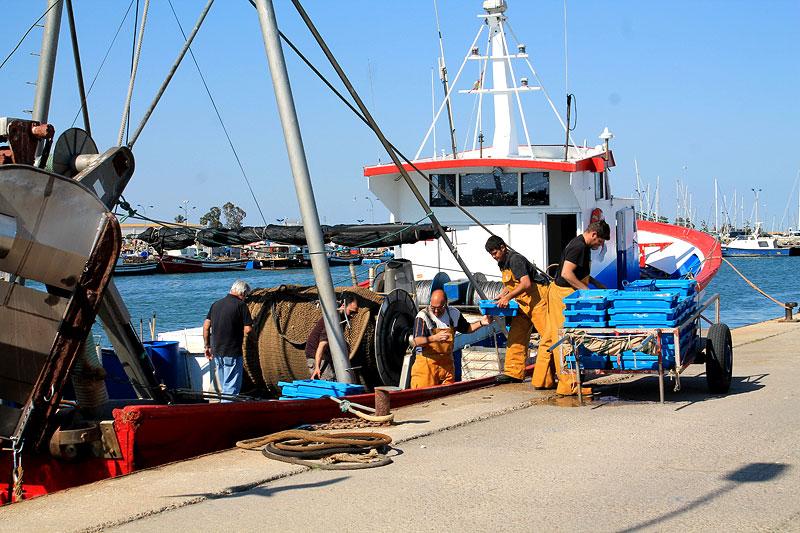 pesca-rapita-barcos-descarga