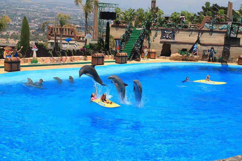 El show de los delfines y niños