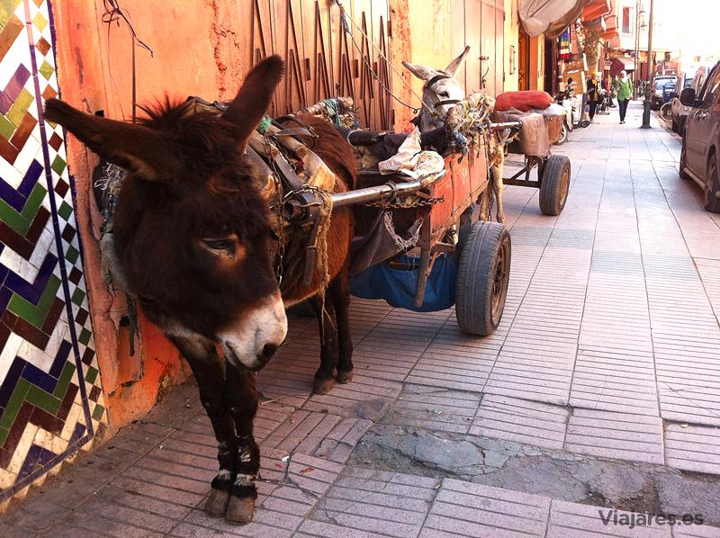 La tracción animal persiste en la gran ciudad de Marrakech