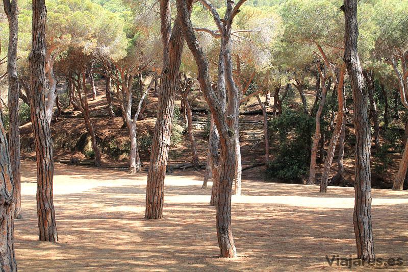 Los pinos proporcionan una agradable sombra en el Pati de l'Ós