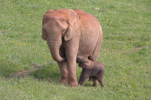 Elefantes-del-Parque-de-la-Naturaleza-de-Cabarceno