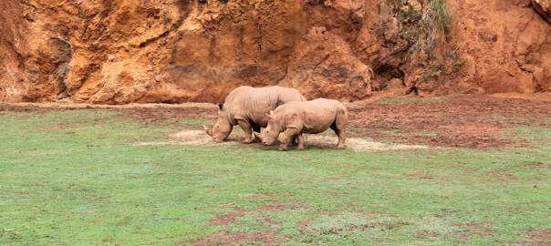 cantabria-cabarceno-con-ninos-rinoceronte-familia
