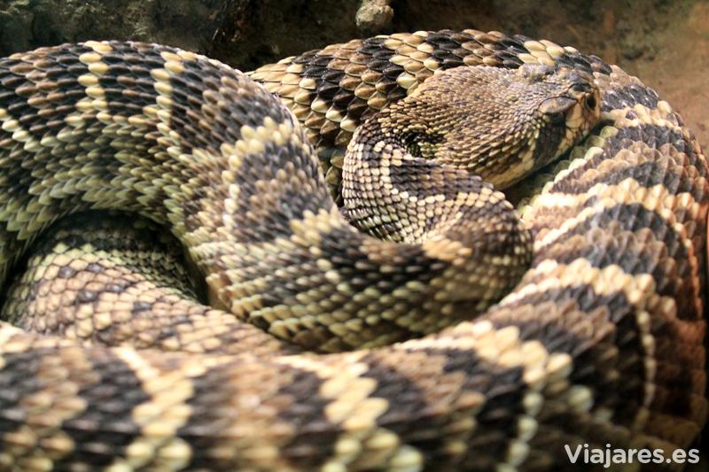 cantabria-cabarceno-con-ninos-serpiente