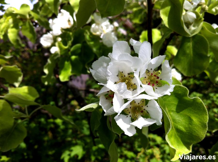 Árbol en plena floración en Kristiansand