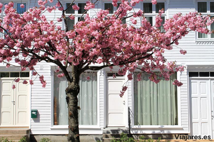 La primavera llega hasta el centro de la ciudad