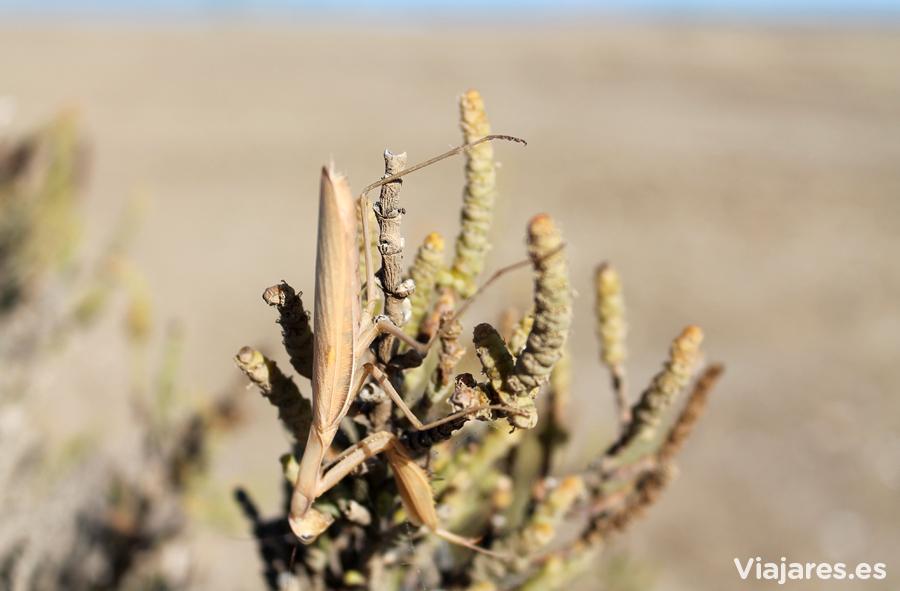 Una mantis camuflada entre las hojas