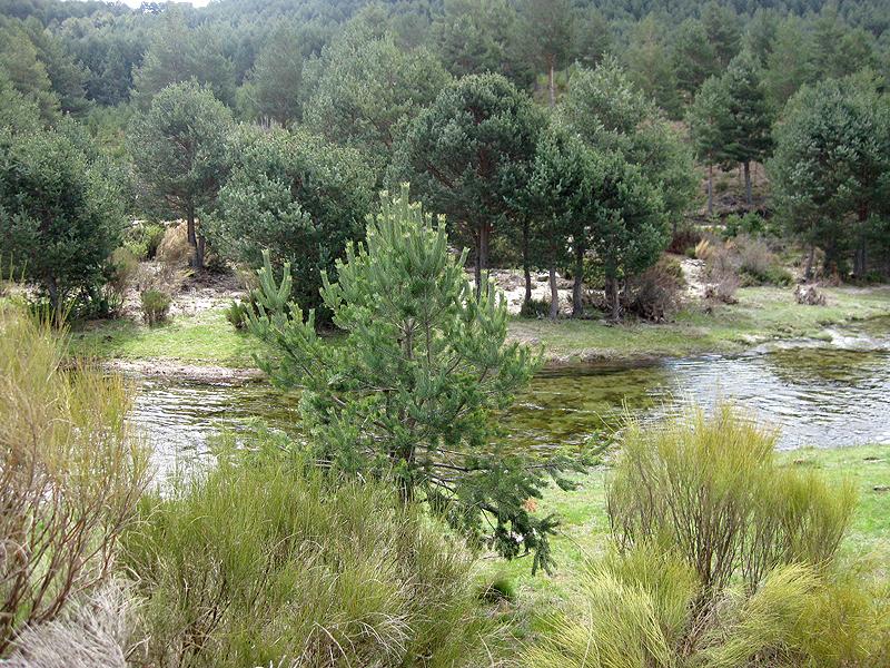 El entorno natural de la Sierra de Gredos