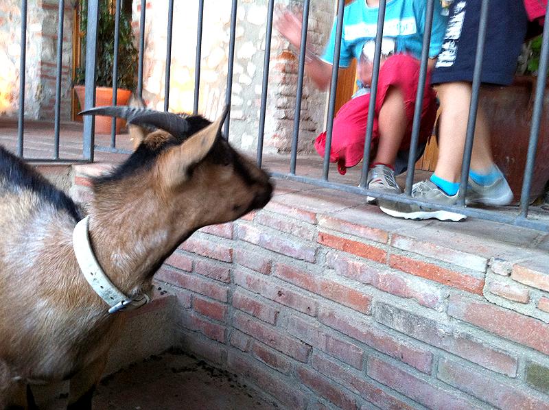 La cabra Banyetes saludando