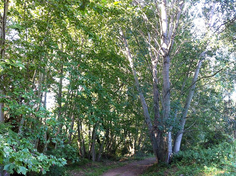 Camino paralelo al río Tenes