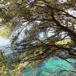 Pinos cerca del mar y una agua cristalina, señas de identidad de la Costa Brava