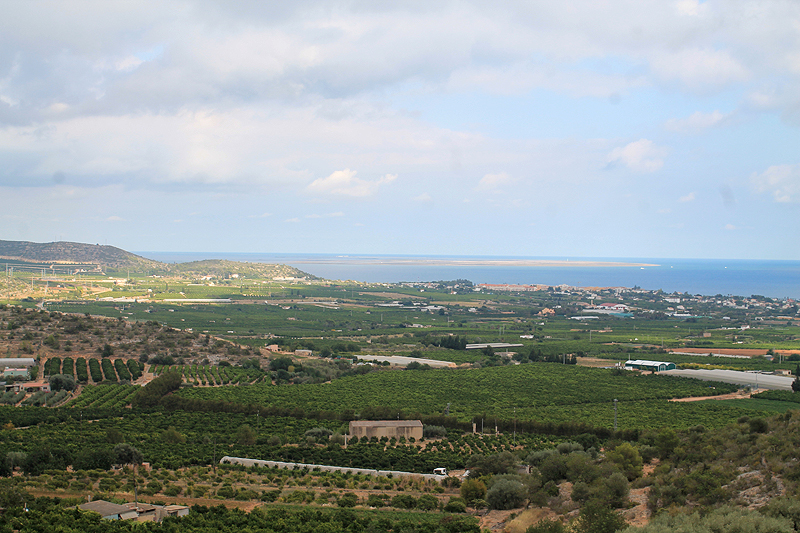 Panorama de cítricos en Alcanar, con el Delta del Ebro al fondo