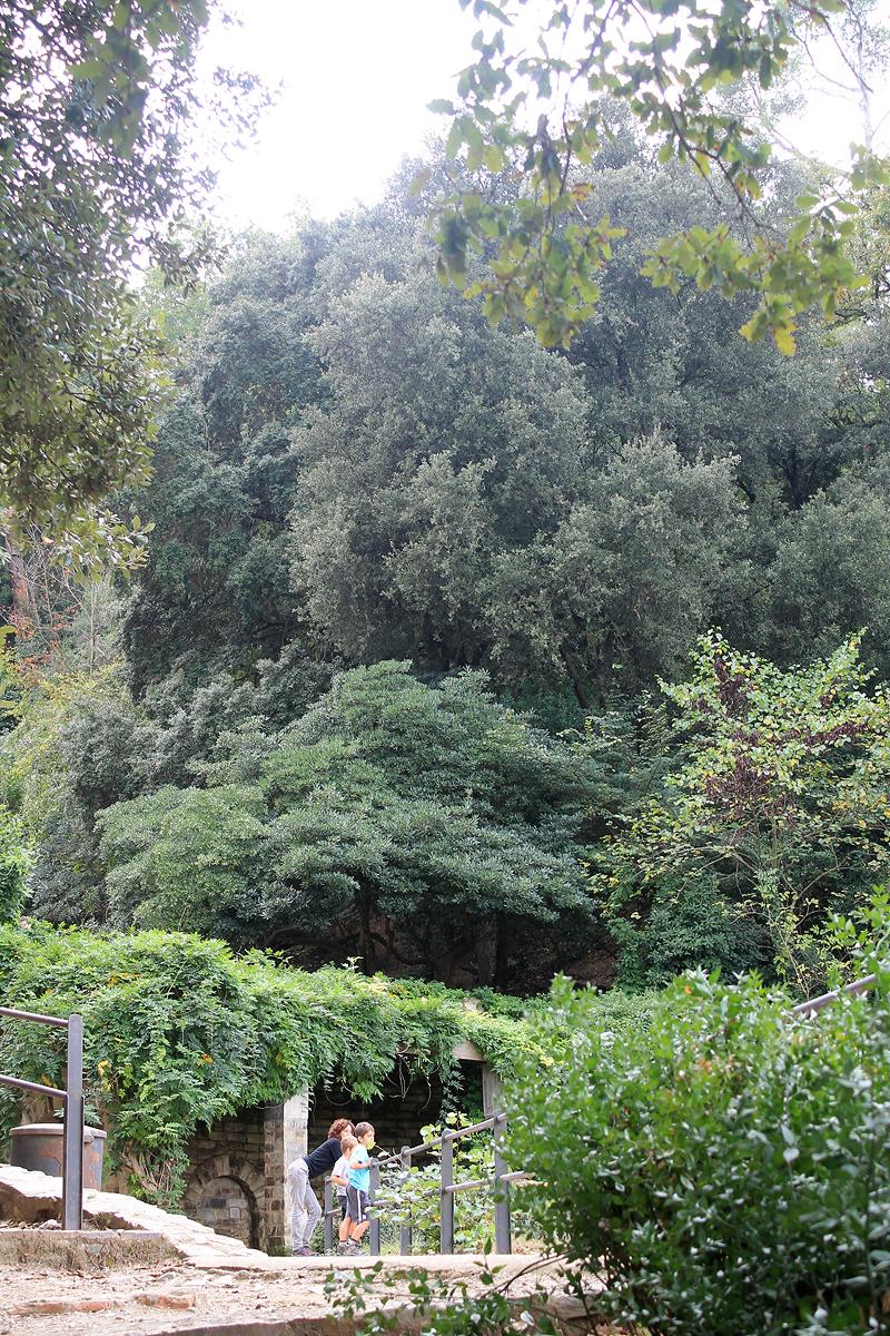 Una vegetación espesa rodea la Font de la Budellera