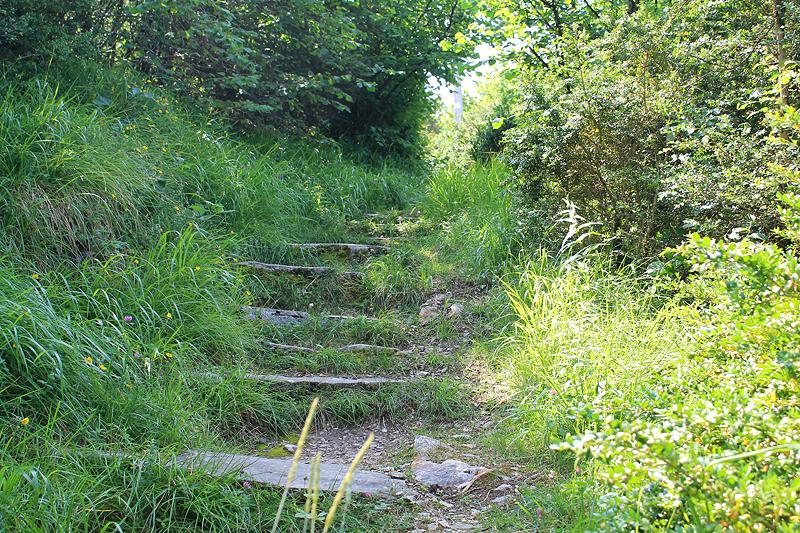 En la parte alta diferentes senderos de abren entre la vegetación