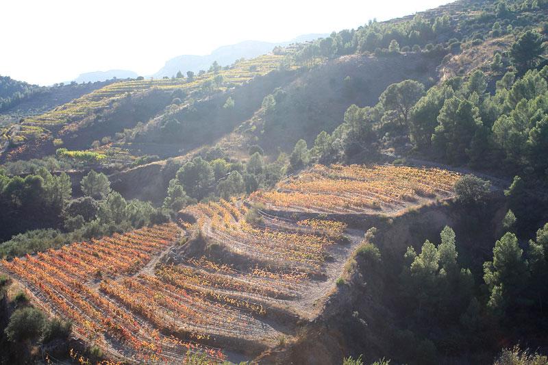 Paisaje de viñas cerca de la Cartuja de Scala Dei, en el Priorat