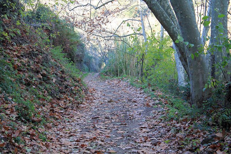 Caminando por Collserola, Molins de Rei