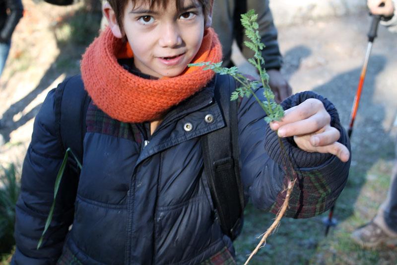 Mi hijo mayor es un experto recolector de zanahorias silvestres