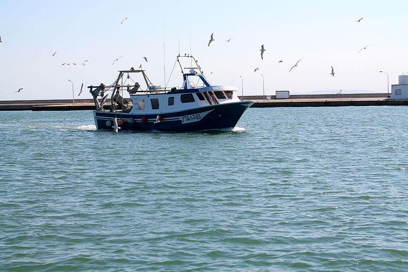 Pesquero llegando a puerto