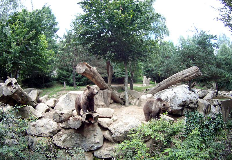 Osos en el Parc Animalier des Pyiréneés