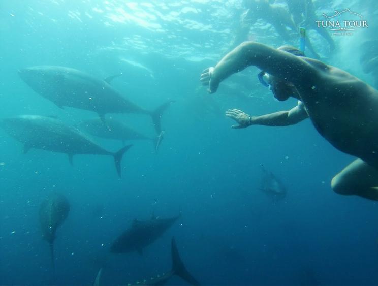 Tuna Tour, buceo con atunes