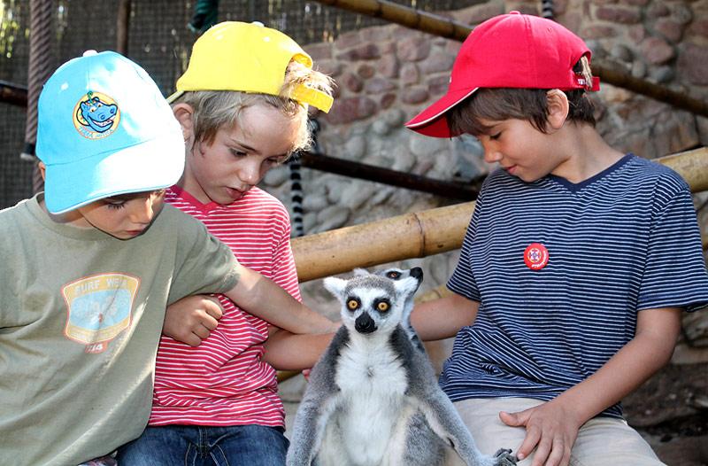Cautivados con los lémures