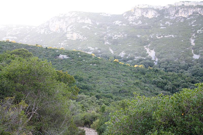 Camino entre la vegetación mediterránea