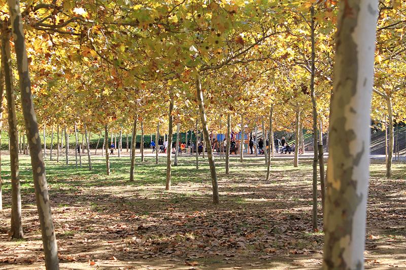 Arboleda en el Parque de Torreblanca