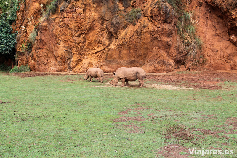 cantabria-cabarceno-con-ninos-rinoceronte