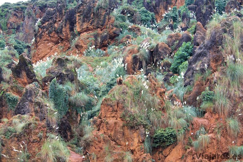 cantabria-cabarceno-oso-pardo-entre-rocas