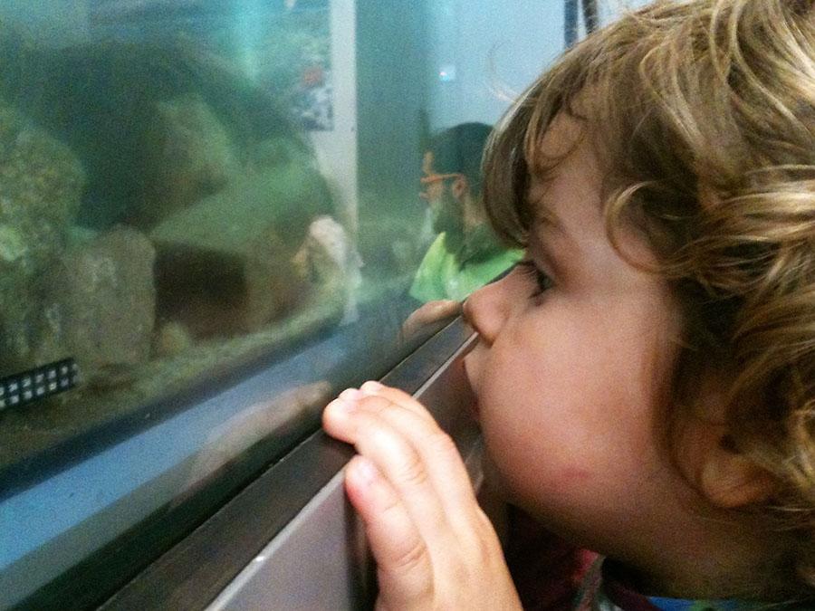 Fascinación pura para descubrir qué habita el acuario