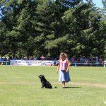 Entre los concursantes, una pastora con su fiel can