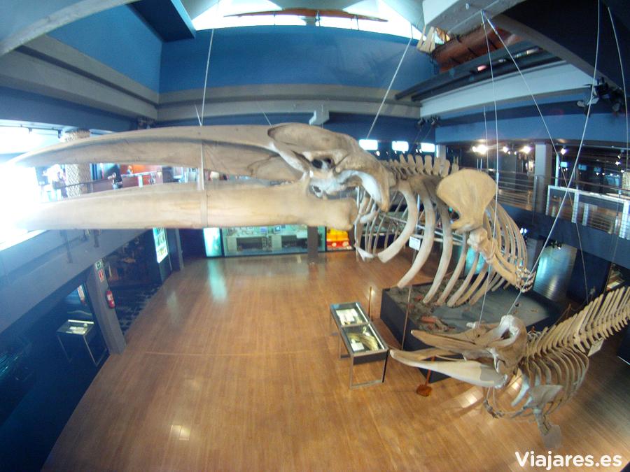 Dos esqueletos de ballenas presiden la entrada al Museo Marítimo del Cantábrico