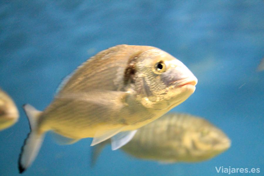 Cientos de peces pueblan los acuarios del museo
