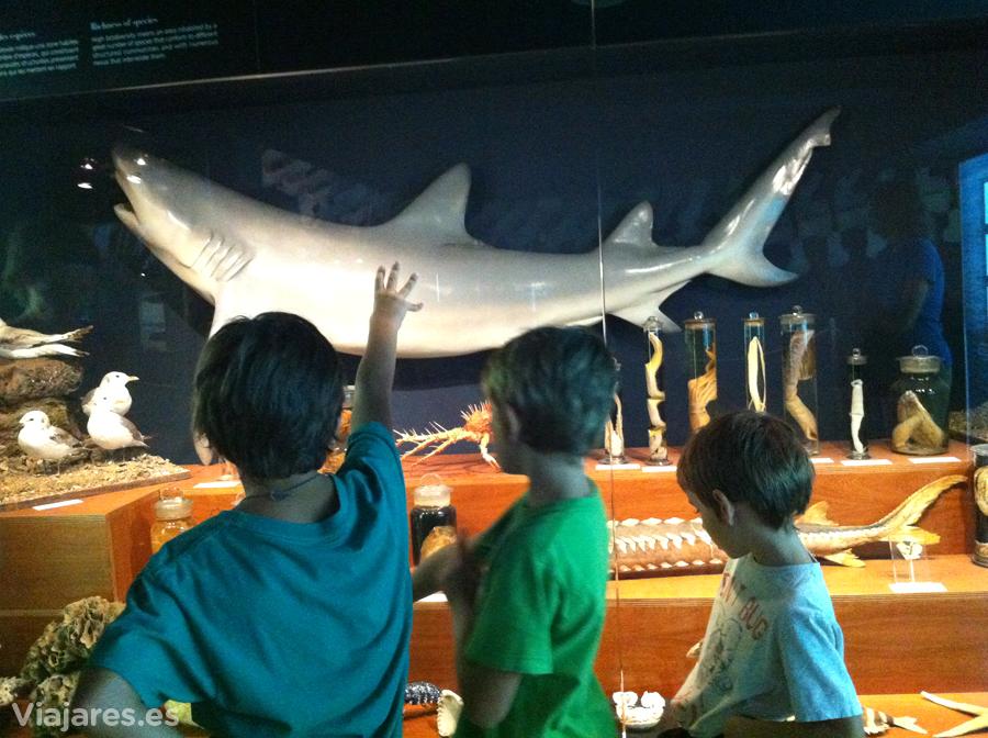 Museo Marítimo del Cantábrico con niños