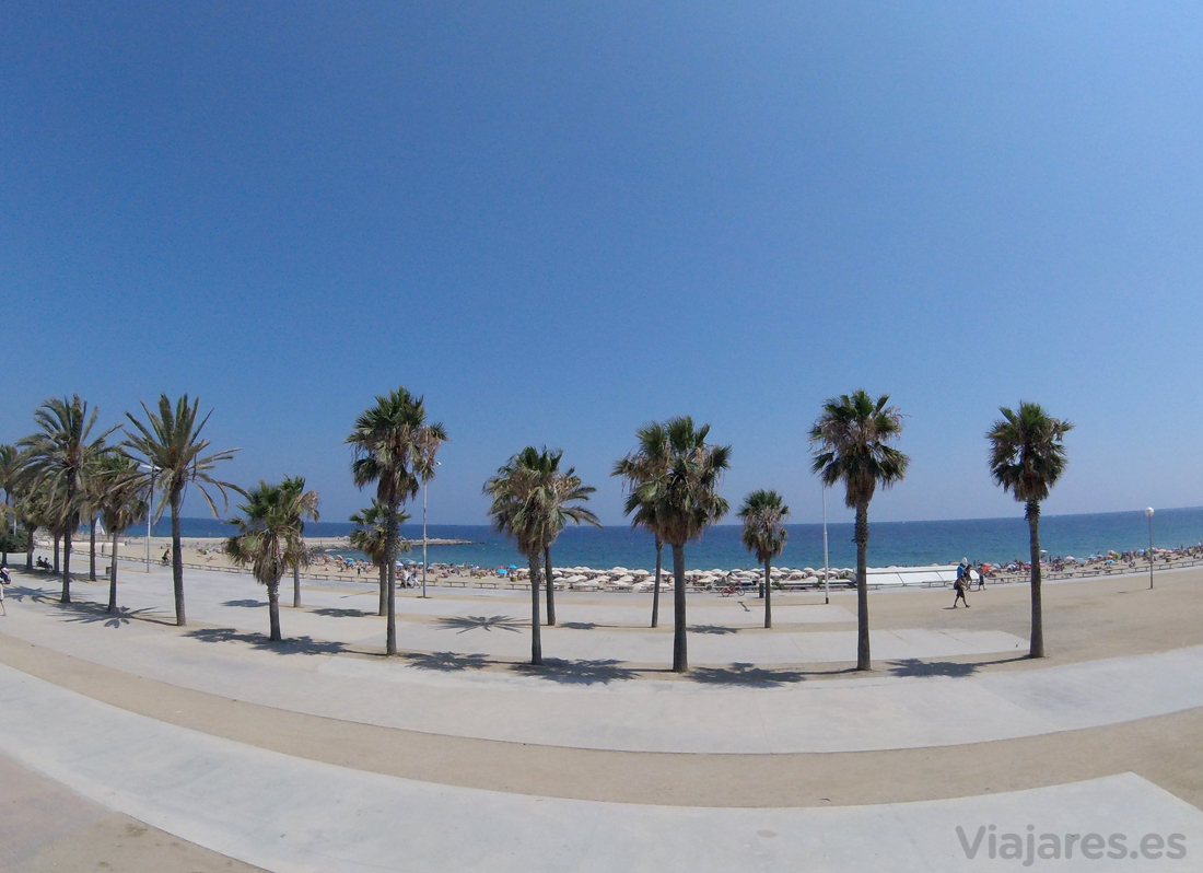 Playa y palmeras en la fachada marítima de la ciudad