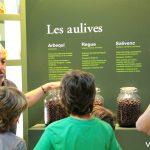 Diferentes tipos de aceitunas en El Molí d'Oli de Vandellòs