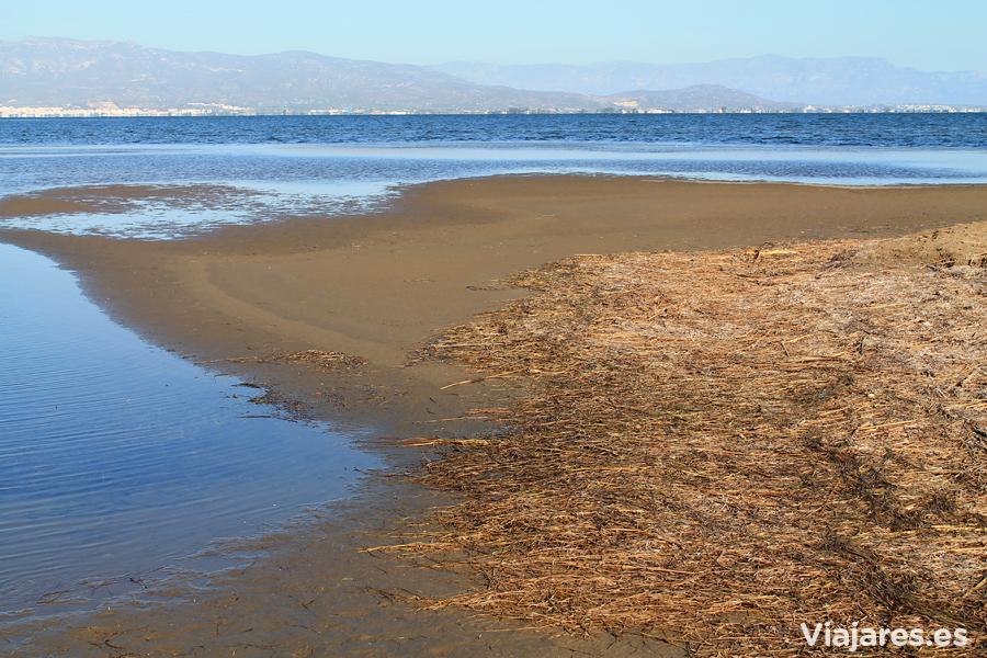 Sedimentos y restos que trae el mar en la mar interior dels Alfacs