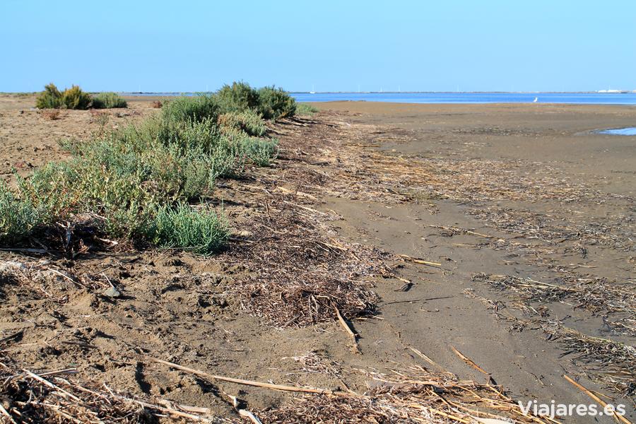 Vegetación típica de la zona