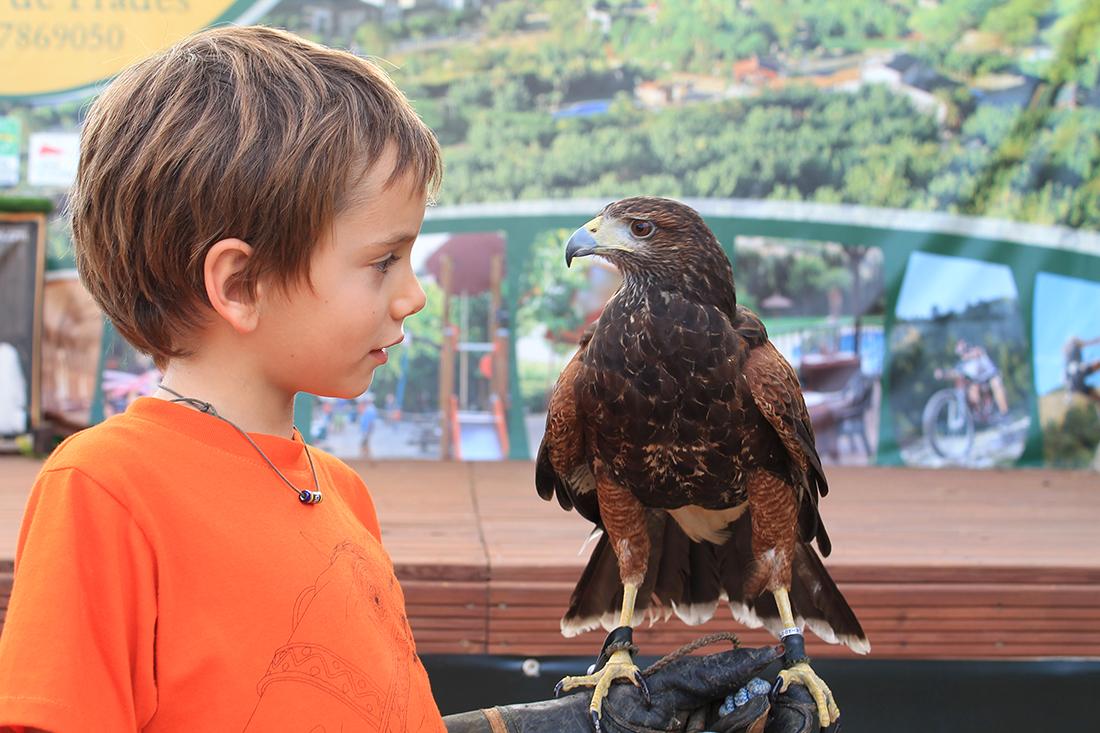 Emoción al sostener una águila