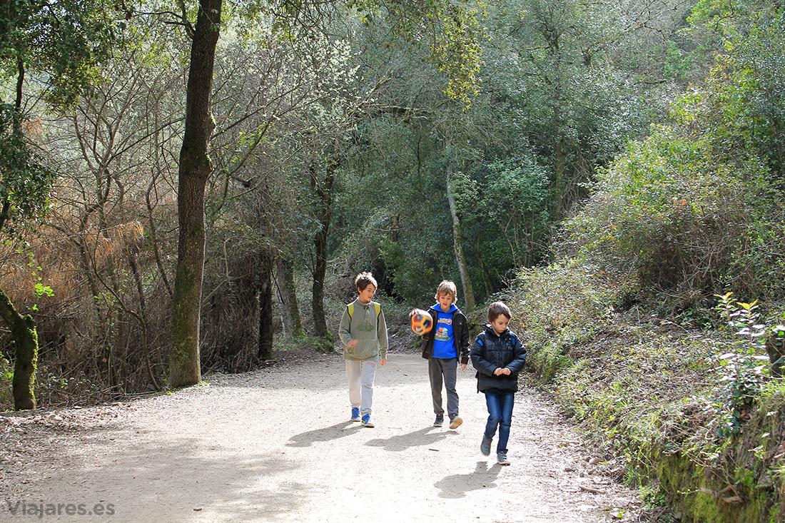 Caminando por la pista forestal