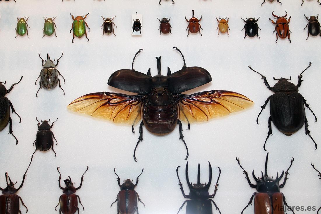 Una de las muchas vitrinas llenas de animales