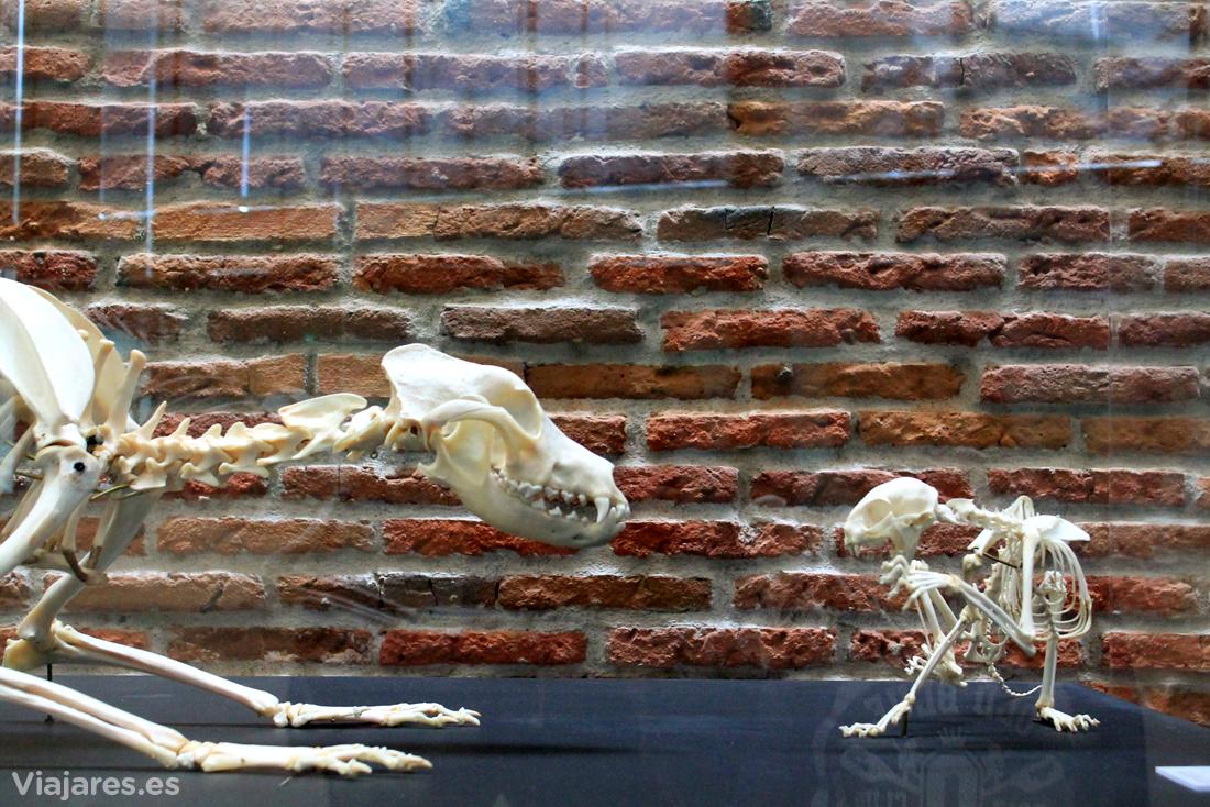Esqueletos de gato y perro en plena lucha