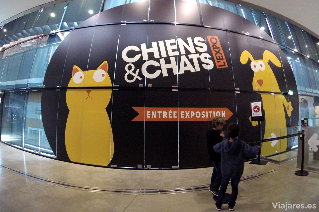 Exposición Perros y Gatos en Muséum de Toulouse