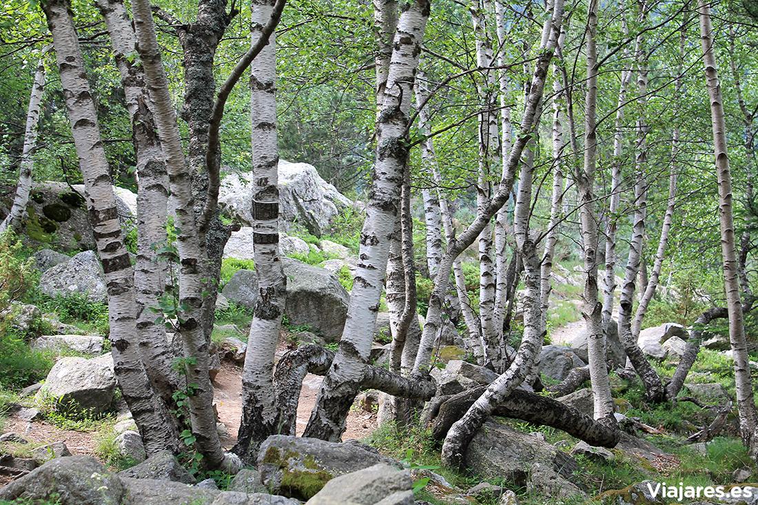 Árboles con formas caprichosas