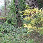 Antiguo pozo de agua dulce de la zona