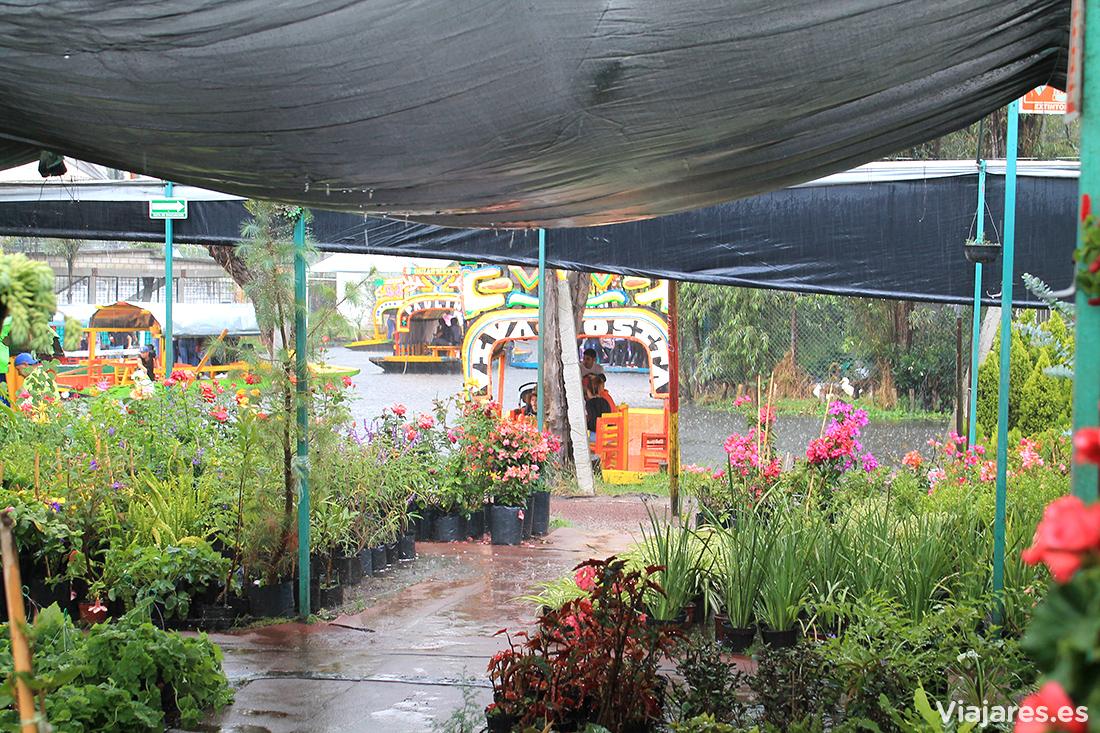 Uno de los invernaderos bajo la lluvia