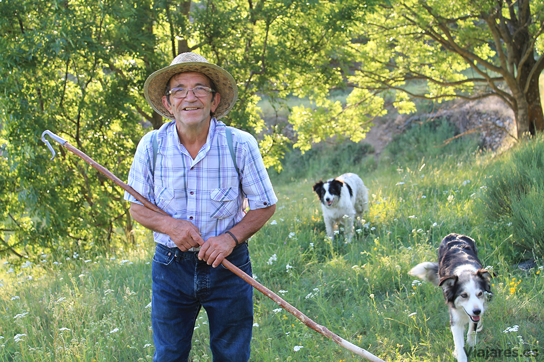 El pastor Jesús de Gavàs con sus perros
