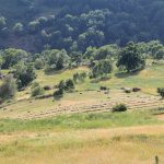 Labores agrarias típicas del verano en el Pirineo