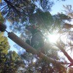 Acción y diversión en los circuitos de aventura en los árboles